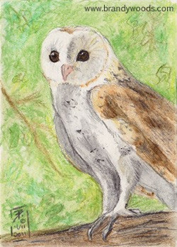 White Barn Owl bird art wildlife ACEO print art card Brandy Woods