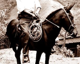 Man on Mule