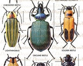 Beetles Bug Insects Oddities - Digital Image - Vintage Art Illustrations - Instant Download
