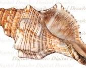 Conch Shell -  Beach Sea Shore Ocean - Digital Photo Image - Instant Download