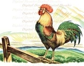 Rooster Crowing Cock-a-doodle-doo - Country Morning Chicken Farm - Digital Image Vintage Illustration