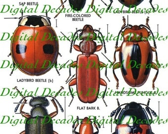 Red Beetles Lady Bug Insects Oddities - Digital Image Vintage Art Illustrations - Instant Download