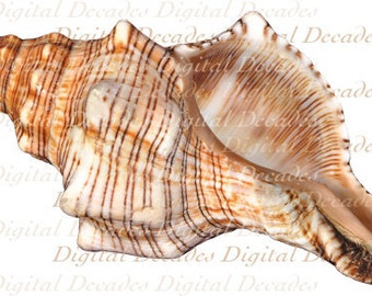 Conch Shell -  Beach Sea Shore Ocean - Digital Photo Image - Instant Download