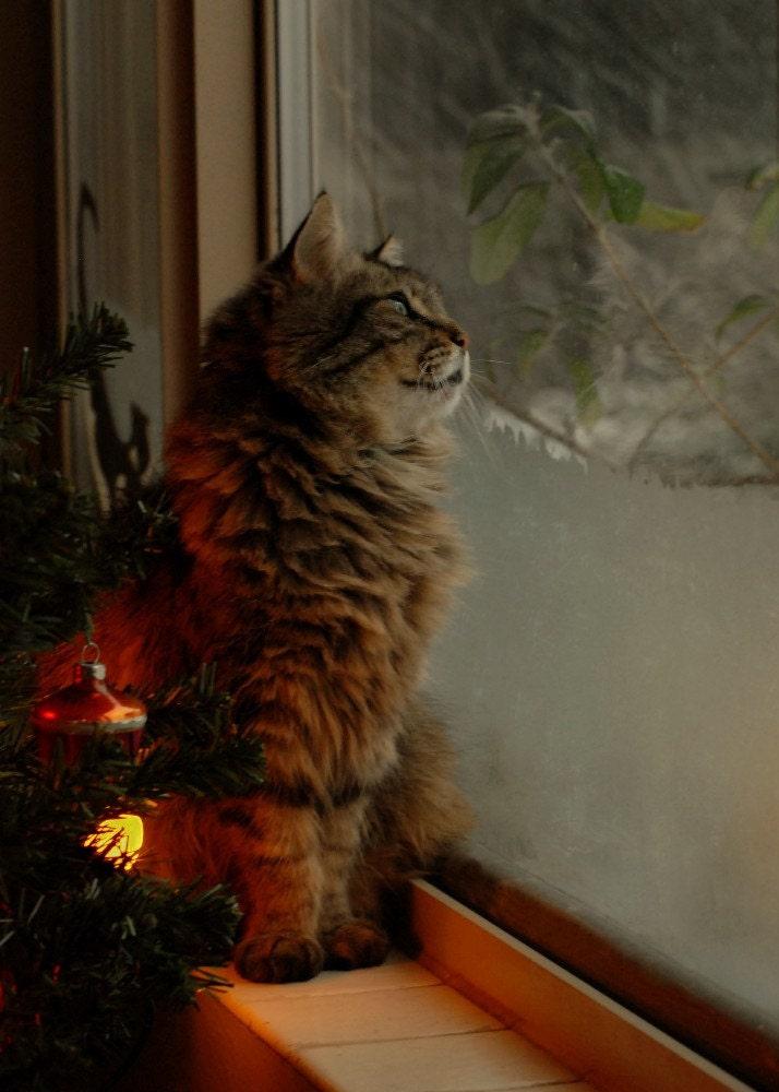 Cat Photo Christmas Cat Waitin For Santa Wall By