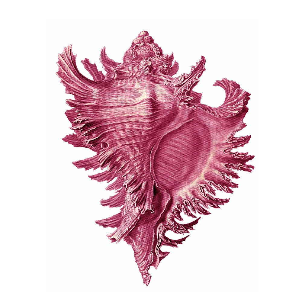 Pink Conch Shell Nautical Vintage Style Art Print Beach House
