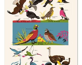 Vintage Birds Colorful Illustration Art Print Diagram Bird Picture - 8x10
