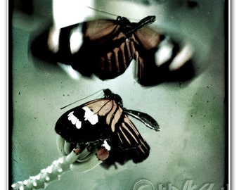 Monarch Butterflies Macro Vintage Style Photo Art Print - 8x8