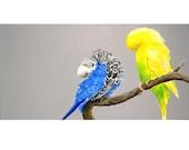 "A Blue and a Yellow Parakeet, 12"" x 6"", Original Painting"