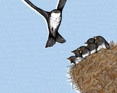 House Martin Nest Illustration (A4 Print)