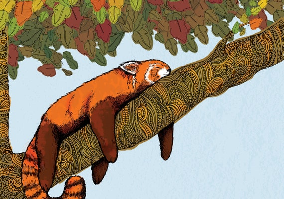Put your feet up -Red Panda (A4 Print)