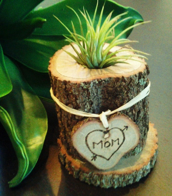 TREASURY ITEM  - Air Plant in Tree trunk with Engraving (Mothers day gift )