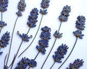 Last set Lavender Pressed Dried with Stem Real Flowers