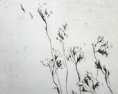 Flower Drypoint Print - Limited Edition - Delicate Florals