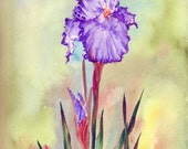 Purple Iris, Dark Green Leaves, Light Green Background, original watercolor painting, green purple