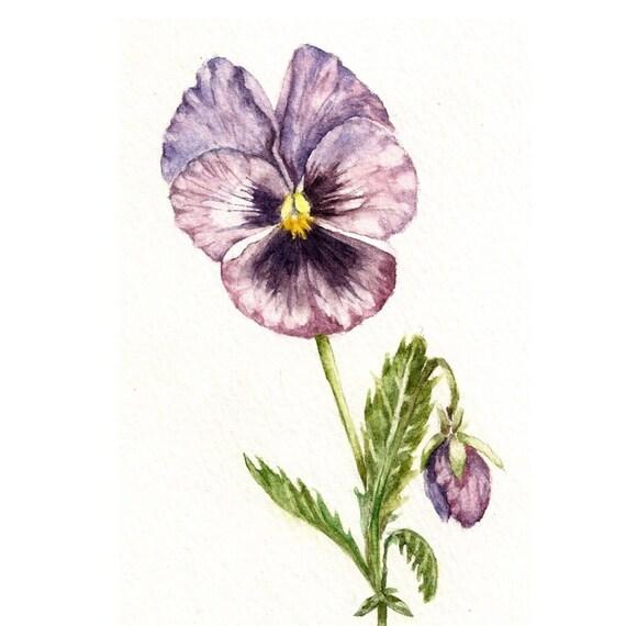 Purple Pansy - Original Watercolor Painting - Botanical Art 5''x7'' Flower Garden Kitchen Nursery Detailed Cottage Chic