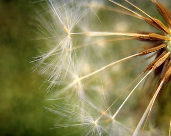 """Make A Wish- Photographic Print. Ready to frame.  Dimensions- 455mm x 305mm / 16"""" x 12"""""""