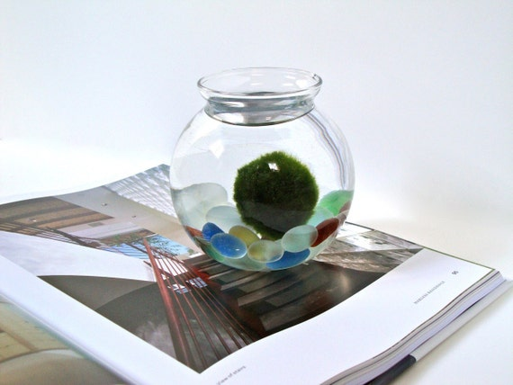 Big Marimo Moss Ball Colorful Aquarium, Marimo Decor with Frosted Colorful Pebbles, Lovely Aqua Stone Terrarium, Easy to Take Care of Plant