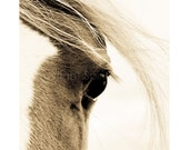 WISP, Arab Horse, Edition Print, Wall Decor, Equine Art. Horse photography, Portrait