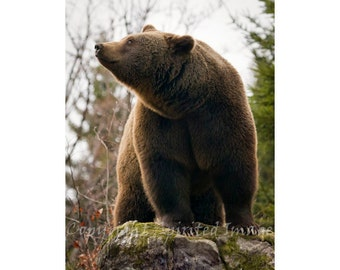 BROWN BEAR PHOTOGRAPHY, 7.5x5in Print - Aroma