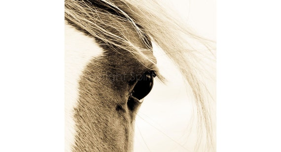 WISP, Arab Horse, Edition Print, Wall Decor, Equine Art. Horse photography, Portrait