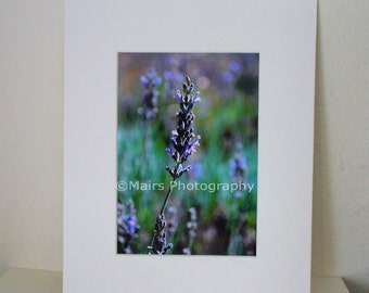 Cottage Decor Flowers Serene Peaceful Garden Photography Greens Lavender Purple  5 x 7 matted print Fine Art Photography