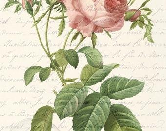Antique Vintage Pink Rose French Love Letter Digital Download Art Print 3