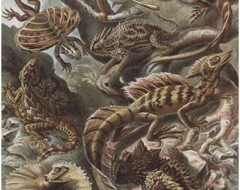 Antique Lizards Digital Download Art Print Prehistoric Natural History Children