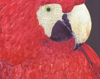 Parrot Portrait, Jungle, Rainforest, Pet, Amazone,  Bird - FREE SHIPPING - Original Art Watercolor by  ebsq Artist Ricky Martin