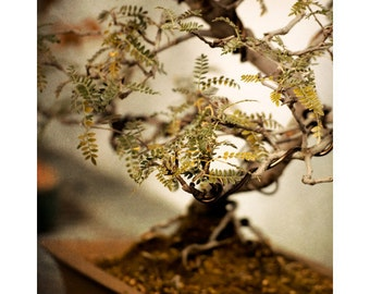 Bonsai tree photo, Japanese zen decor, Wall art, Garden decor, Rustic art, Shabby chic decor.