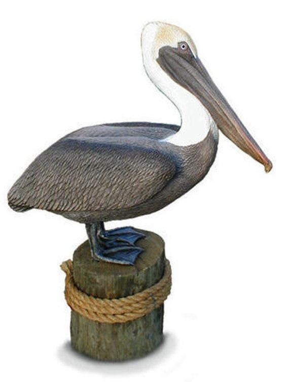 Life Size BROWN PELICAN Sculpture, limited ed.