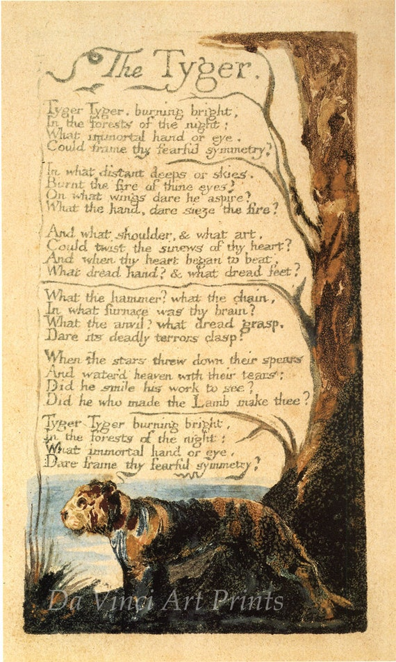 the cycle of questioning in the tyger by william blake Critically analyze the tyger by william blake the poet questions where deep below the earth or high in the heavens did the wild fire which is now contained in.