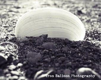 Sea-Through Shell