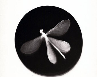 One of a kind Dragonfly photogram - original black and white artwork