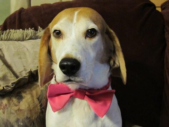 Satin Dog Bow Tie Collar - Ring Bearer Wedding Accessory