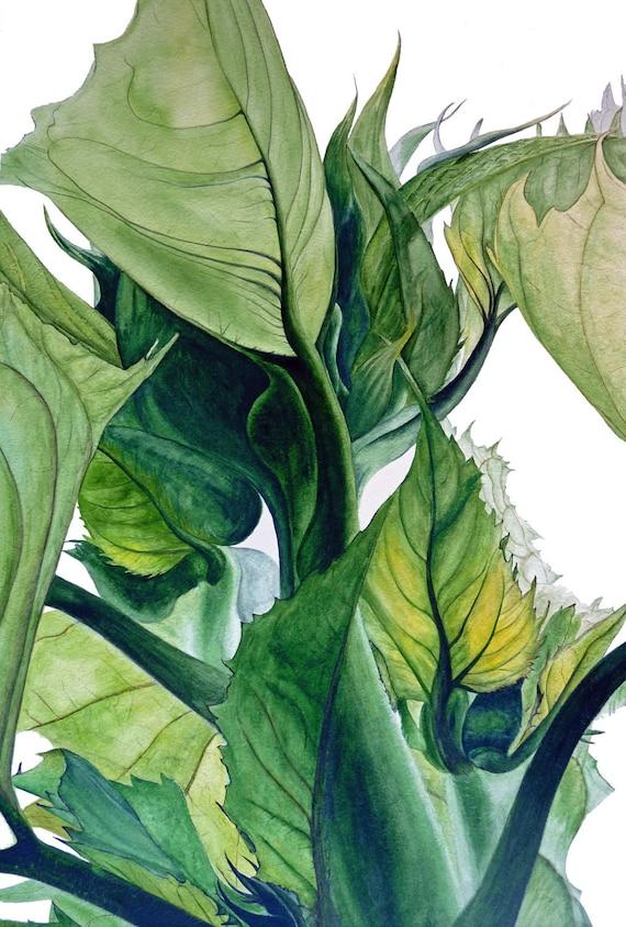 Sunflower Leaves - fine art botanical print, 11 x 8 in, botanical watercolor, sunflowers, botanical print