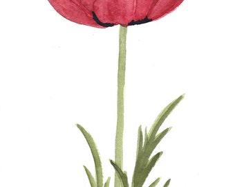Single Red Poppy Original Watercolor 2