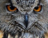 Amber Eyes, Owl, Masculine, Blank Greeting Card, Photo Card - MairsPhotography