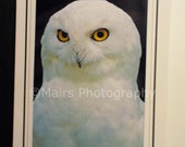 Owl, Yellow Eyes, Snowy Owl, FATHERs Day Card, Blank Greeting Card, Photo Card