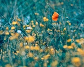 Flower Field Photograph, Fine Art Photography Print, Whimsical flower print 8x10 or 8x12