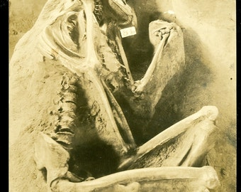 Postmortem Photo Postcard RPPC Skeleton Archaeological Dig Whiteford's Indian Burial Pit Salina Kansas Real Photo Postcard