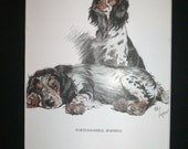 Tortoiseshell spaniels Signed mounted Vintage 1930 Cecil Aldin dog plate print Unique Christmas Birthday gift Xmas Thanksgiving present