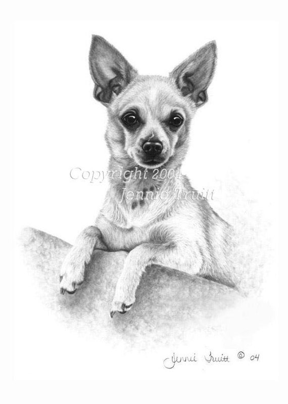11 x 14 Deer Chihuahua Art Print from Original Pencil Drawing by ...