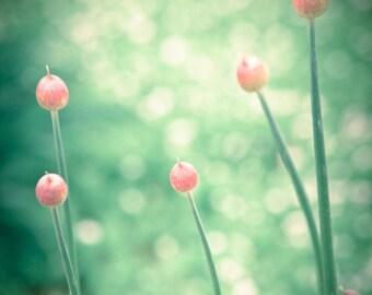 Spring Buds Bokeh Flowers Allium -Green Orange Pink  -Home Decor  -Fine Art Print -8x10  -11x14  -16x20