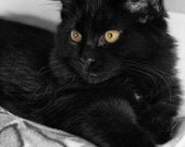 Maggie, 5x7 Fine Art Photography, Cat Portrait, Black and White Photography, Charity item - CindiRessler