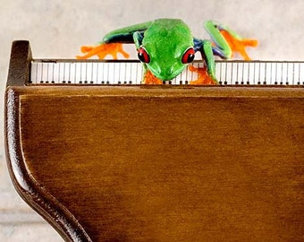 Piano Art, Music, Frog Humor, 8x10 Grand Piano