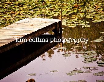 SOLITUDE-Animal Photography-English Bulldog-Fine Art Photography-Animal Lover-Bulldog