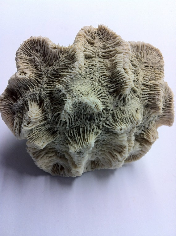 Natural Cone Shaped  White Coral Rock from the Caribbean (11)