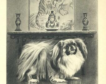 Fluffy PEKINGESE Print or Racing GREYHOUND Print - Your Choice  Vintage 1940s Dog Print Morgan Dennis Art Print 34