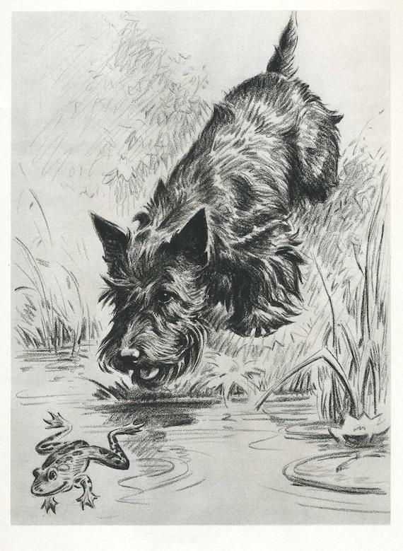Curious SCOTTISH TERRIER Print and FROG Scottie Print Vintage Morgan Dennis 1940s  Plaindealing 126