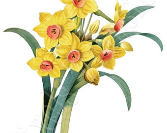 DAFFODILS Instant Download Digital Wedding Clipart, vintage DAFFODIL spring flower large image 006